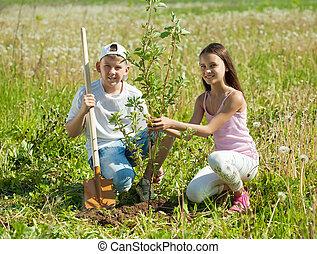 boy and girl setting tree - Teenager boy and girl setting ...