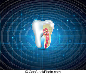 Teeth cross section beautiful illustration