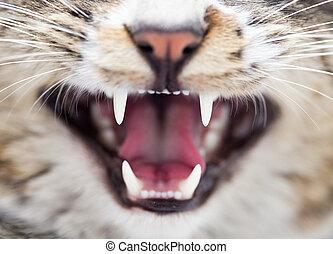 teeth evil cat as the backdrop. macro