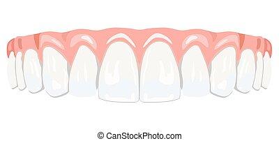 Teeth gums - The top row of white teeth