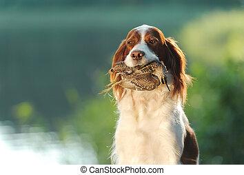 teeth, watersnip, dog, jacht, vasthouden