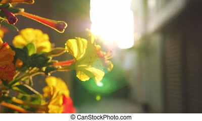 tegen, struik, zonlicht, bloeien