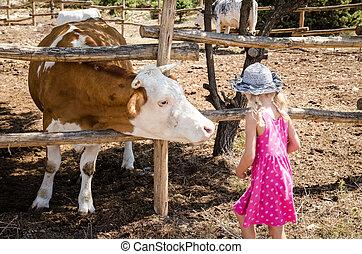 tehén, gyermek