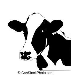 tehén, nagy, vektor, fekete, portré, fehér