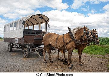 tehervagon, ló, flamand, megfog, át, befedett