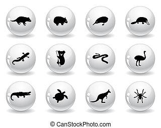 teia, australiano, botões, ícones animais