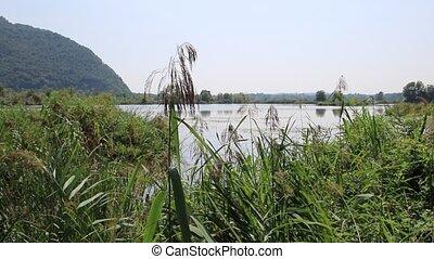Teich, landschaftsbild