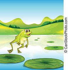 teich, springende , frosch