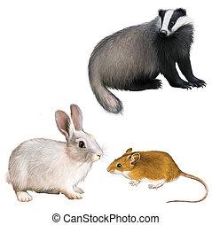 tejón, conejo, ratón