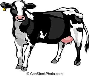 tejgazdaság tehén