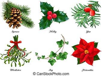 tejo, vector, hiedra, realista, poinsettia., muérdago, decorations., navidad, acebo, plantas, conjunto, picea, 3d