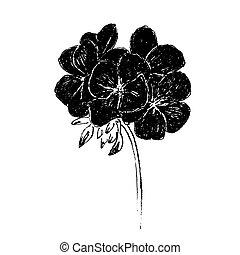 tekening, bloemen, inkt, geranium, ruige , pelargonium, hand...