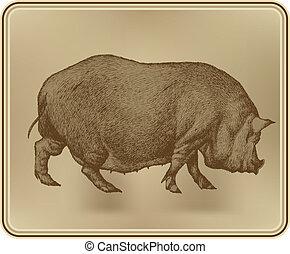 tekening, vector, varken, illustration., hand