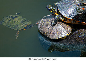 teknősbékára halászik