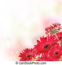 tekst, bloemen, gerber, kosteloos, ruimte
