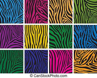 teksturer, sæt, farverig, vektor, zebra flå