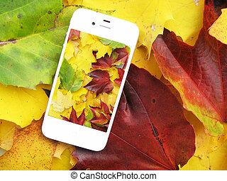 teléfono celular, en, el, colorido, otoño sale