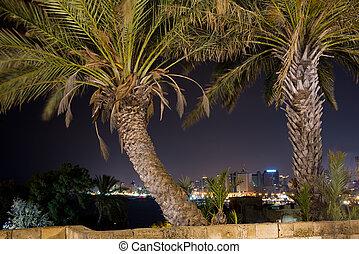 tel-aviv, δέντρα