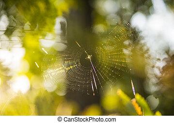 tela de araña, contrailuminación