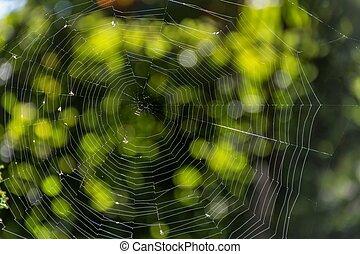 tela de araña, en, el, rayos, de, el, sol