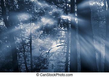 tele, erdő, hold
