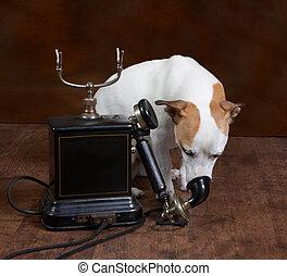 telefon, hund