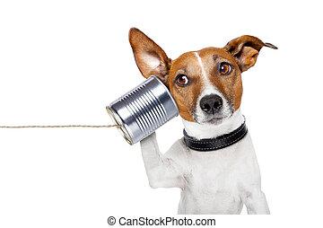 telefon, pies