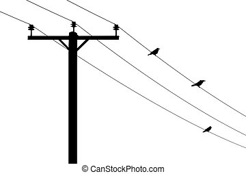 Telegraph pole with perching birds