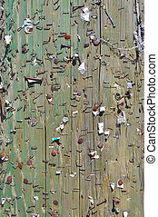 A telephone pole full of staples and nails