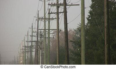 Telephone poles. Bird takes flight.