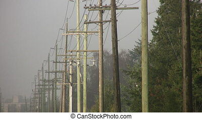 Telephone poles. Birds take flight. - Line of telephone...