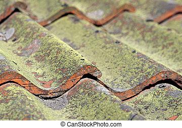 telhado tiled, com, fungo