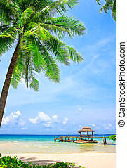 teljes, tropikus, pálma tengerpart, fa