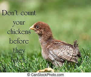 """tellen, kippen, amerikaan, jouw, buiten, zij, hatch"""", baby, gezegde, chicken, summer., """"don't, voor"""