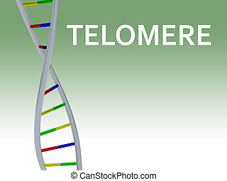 TELOMERE - genetic concept