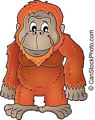 tema, imagem, orangotango