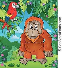 tema, imagen, orangután