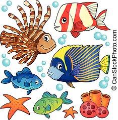 tema, pez, arrecife, colección, coral