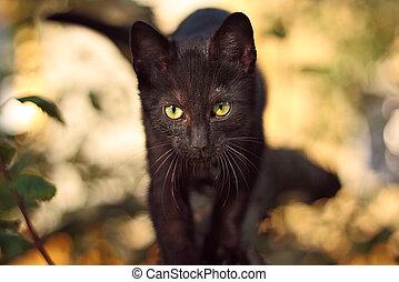 temný dírka, kočka, podělanost- lakovat koho, strom