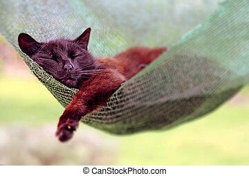 temný devítiocasá kočka, hamak, spací