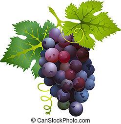 temný zrnko vína