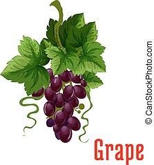 temný zrnko vína, ovoce, botanický, ikona