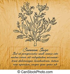 Temp 11 2000 2000 - Banner with Black Bush of Common Sage. ...