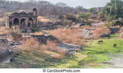 tempel, ruinen, ranthambore, fort, ranthambore,...