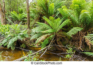 Temperate rain forest river in Southern Tasmanian - Hastings...