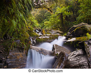 Temperate rainforest waterfall - Waterfall in a lush new...