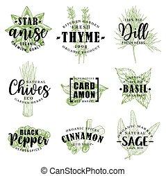 tempero, ou, erva, lettering, com, alimento, condimento, esboço