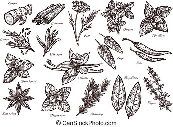 tempero, vetorial, isolado, ícones, e, planta, para, alimento