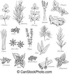 temperos, e, ervas, vetorial, esboço, ícones