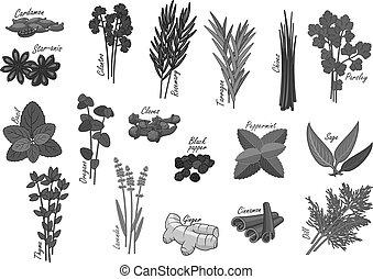 temperos, e, ervas, vetorial, isolado, ícones